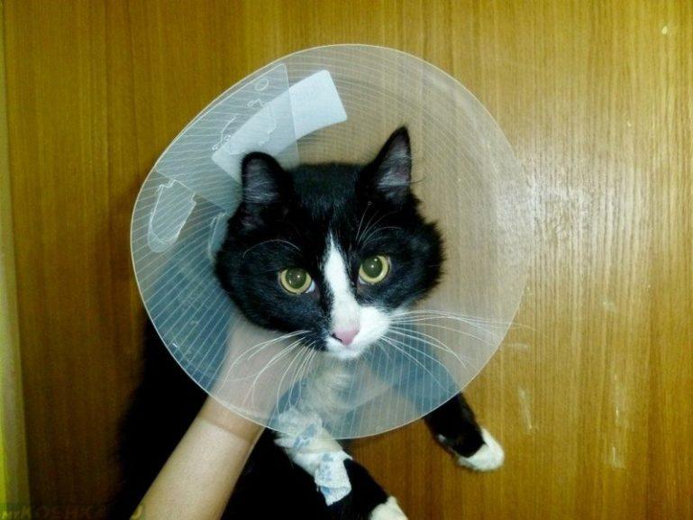 Защитный конус для кошек