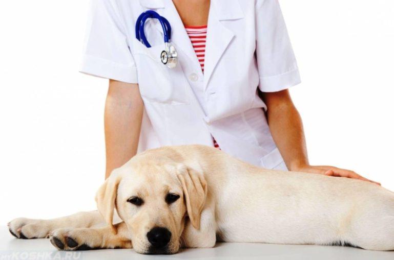 Препарат назначает ветеринар