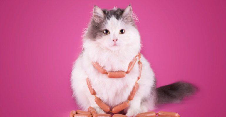 сосиски и кошка 1