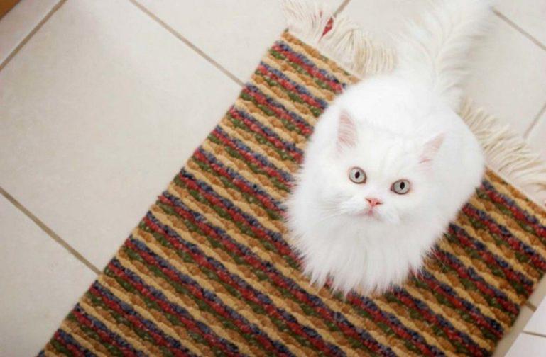 кошка на коврике