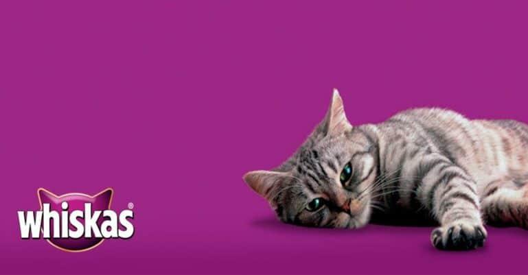 вискас корм для кошек